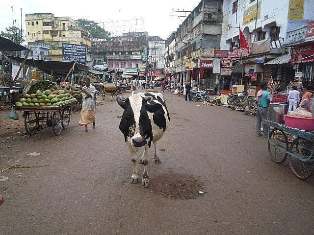 おひとりさまインド旅の画像
