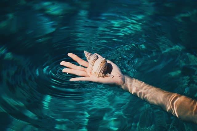 水面で貝殻を手の平に乗せている画像