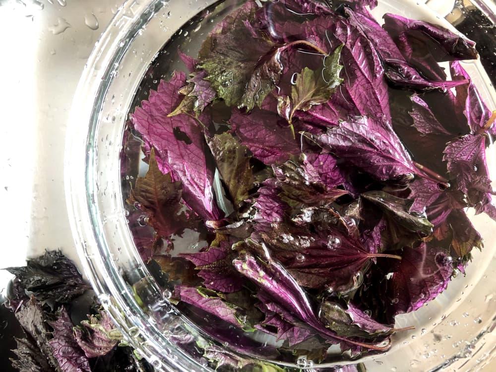 赤紫蘇の画像