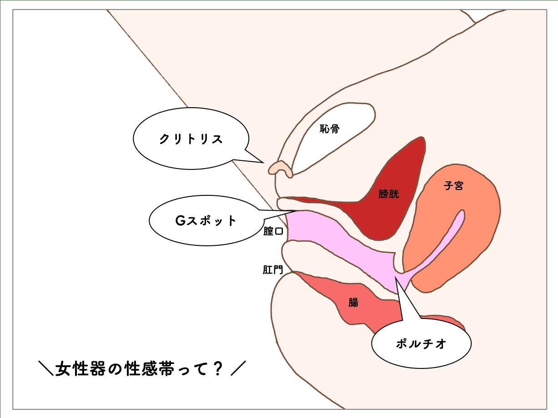 女性の性感帯 解説画像