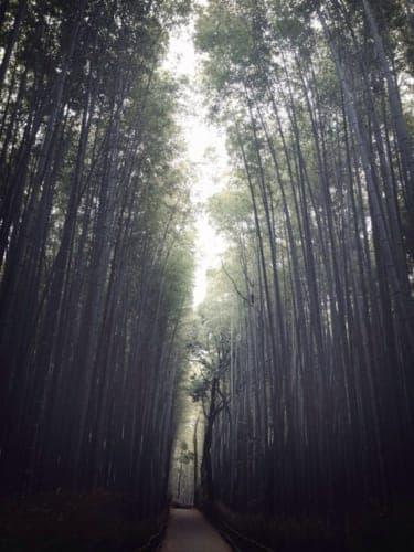 KYOTO TRIP〜嵐山・GREEN E BOOKS・くらま温泉・MIYAVI〜