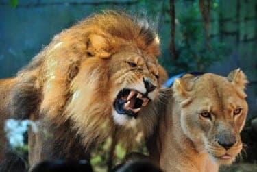 「動物のSEX」から学ぶ、恋愛や結婚は命がけの戦争であるという自然の摂理