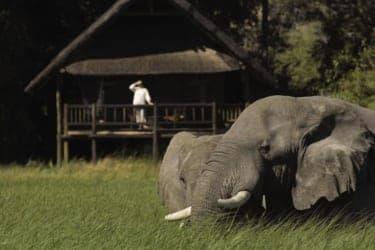 大自然と一体化するキャンプリゾート『オリエント・エクスプレス・サファリ』
