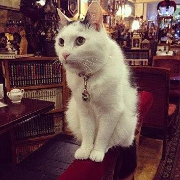 猫が働く純喫茶?新宿の喧騒を忘れてひと休みを