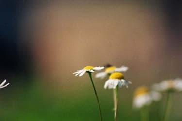 自分の立ち位置や居場所に不安を感じたときの処方箋『置かれた場所で咲きなさい』