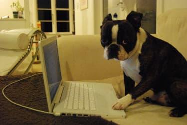 キモ過ぎる男子の妄想ツイート『仕事と私どっちが大事なのって言ってくれる彼女も仕事もない。 わが妄想のツイッター録』