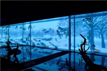 金魚が江戸情緒あふれるアートに!?『ダイナースクラブ アートアクアリウム展 2012 & ナイトアクアリウム』