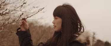 許された罪と、許されざる恋とは『桜並木の満開の下に』