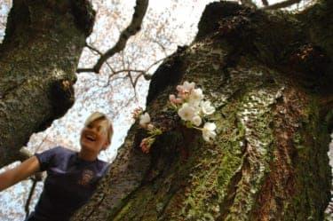 幸せになりたい女子が目指すべきは、花より木なのよ!
