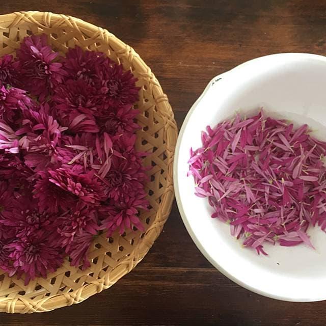 太田みおさんの菊の花レシピ